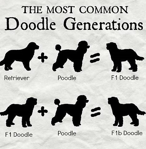 Doodle Generations
